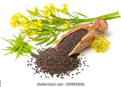 canola seeds and fresh canola flowers isolated on white