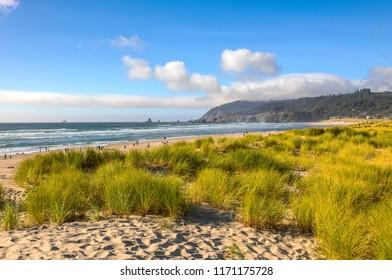 Canon Beach grass sand and surf landscape Oregon coast