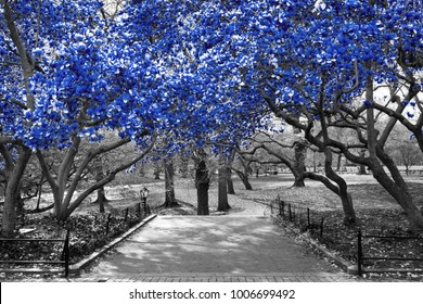 Canopy of blue trees in surreal black and white landscape scene in Central Park, New York City