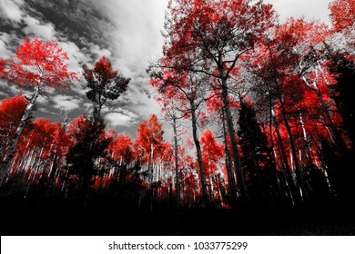 Canopy of red trees in black and white forest landscape