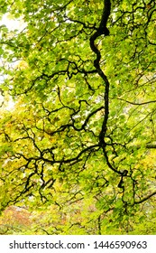 A canopy of spring leaves in mixed woodland clearing.