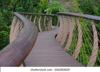 Canopy suspension bridge through a botanical garden in kirstenbosch cape town south africa