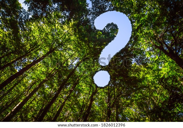 Die Canopy dieses Waldes hat ein Loch in der Form eines Fragezeichens