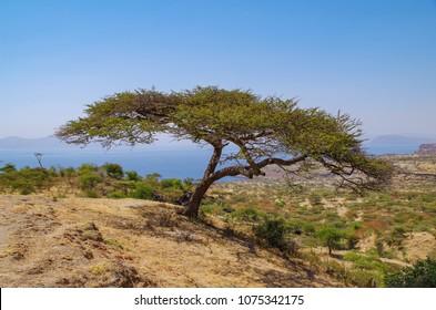 Oromia Images, Stock Photos & Vectors | Shutterstock