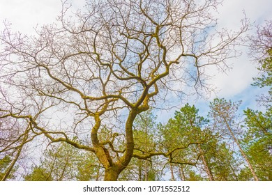 Canopy of a tree in sunlight in spring