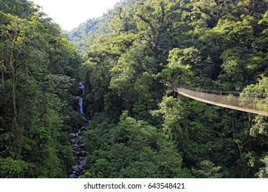 Canopy Tree Trek, Scenery with Forest and Waterfall. Boquete, Panama