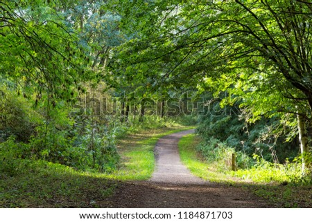 A canopy of trees hangs over a dirt path, weak sunlight shines through the trees and across the path.