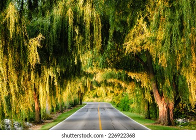 Canopy of trees over a lonely road, Sandusky, Ohio, USA.
