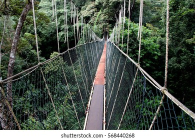 A canopy walkway high in the trees of the Taman Negara National Park in Malaysia