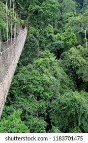 Canopy Walkway Rope Bridge at the Kakum National Park near Cape Coast, Ghana