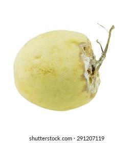 Cantaloupe rotten isolated on whited background.