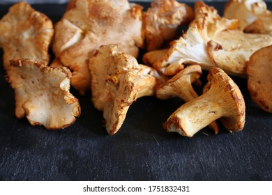 Cantharellus cibarius sur plaque de pierre noire