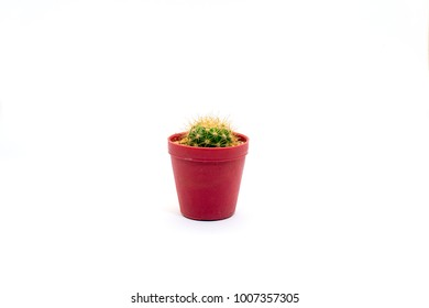 Cantus tree  On a white background