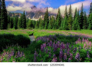Canyon Creek Meadow and three fingered jack mountain in the Oregon Willamette national forest.