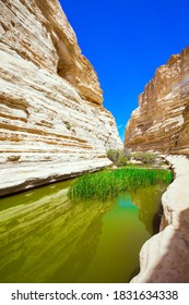 The canyon Ein Avdat is formed by the Qing River in the Negev desert. In the greenish mirror lake, reeds grow. Israel. Photo taken with a fisheye lens. The concept of active and photo tourism