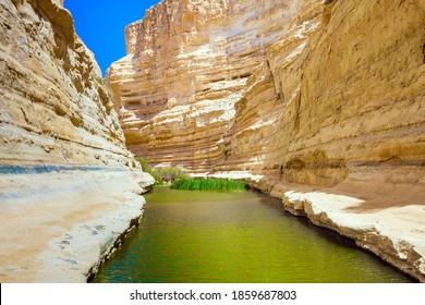 The canyon Ein Avdat is formed by the Qing River in the Negev desert. The greenish mirror water of a small lake. There are many caves in the steep walls of the canyon. Israel