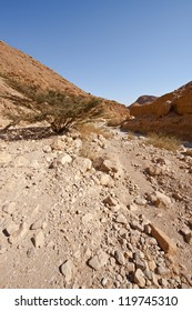 Canyon in the Judean Desert on the West Bank of the Jordan River