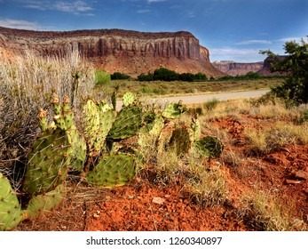 Canyonlands National Park, Utah. Dramatic deep perspective image. Cactus and red earth foreground with canyon walls behind.