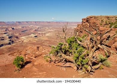 Canyonlands National Park Utah Landscape