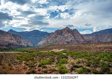 Canyons and desert, and a vibrant blue sky across a green blooming desert.