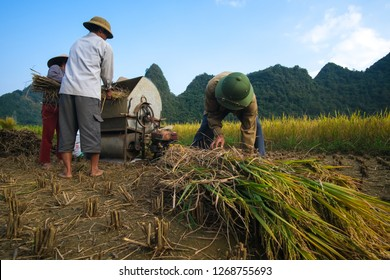Cao Bang, Vietnam 10-2018: Harvest season. Group of farmers harvesting ripe rice by hand, sickle, machine on yellow rice field. Farmer work reaping the rice field by sickle. Rural scenery ripe paddy