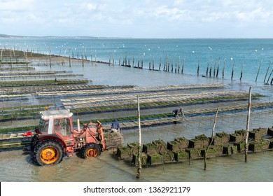 Cap Ferret (Arcachon Bay, France), oyster farmer at work