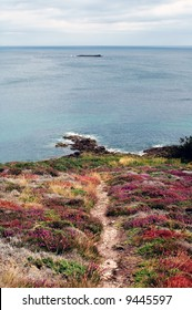 Cap Frehel (Brittany, France) - A flowered promontory
