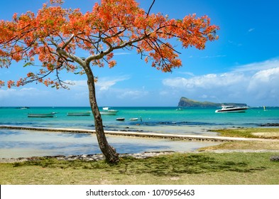 Cap Malheureux. Mauritius. North coast of Mauritius with a flamboyant tree and the Morne island in the background.