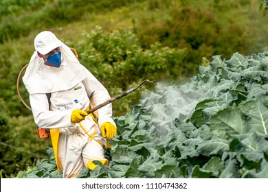 Capao Bonito, Sao Paulo, Brazil, December 18, 2009. Farmer with manual pesticide sprayer in cabbage field