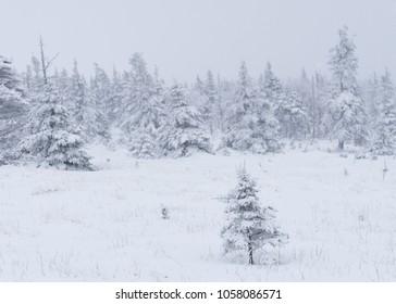 Cape Breton Highlands National Park, Nova Scotia / Canada