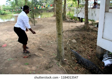 Cape Coast, Ghana - March 10th 2013: African woman lures a large crocodile out of the water underneath a house in a village