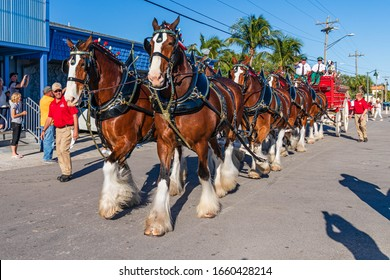 Cape Coral, Florida / USA - 3/1/20 : Budweiser Clydesdales making an appearance in Cape Coral FL. They were first introduced to the public on April 7th, 1933, to celebrate the end of prohibition.