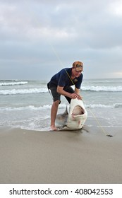 CAPE CROSS, NAMIBIA - JAN 31, 2016: Unidentified fisherman caught the big copper shark on the beach at twilight. A tag and release fishing is popular in Namibia