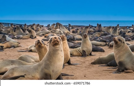 Cape Cross Seal Reserve in the South Atlantic in the Skeleton Coast, Namib desert, western Namibia. Home to one of the largest colonies of Cape fur seals in the world.
