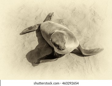 Cape Fur Seals on Cape Cross - Namibia, Africa (stylized retro)