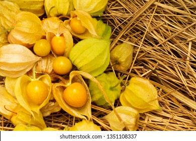 Cape Gooseberry Physalis Peruviana or Ground cherries, winter cherry, Physalis minima, Pygmy ground cherry, Inca berry, Golden strawberry, Strawberry tomato, Husk tomato on straw background