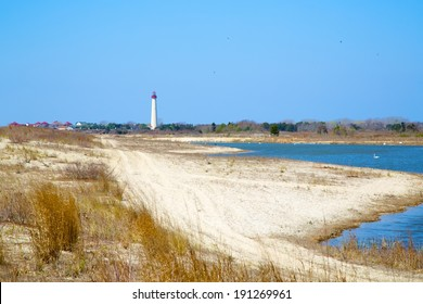 Cape May light house by bird sanctuary