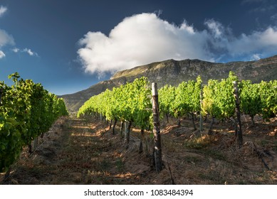 Cape Point Vineyards. Wine Estate with a restaurant and function venue with sea and mountain views in Cape Town.