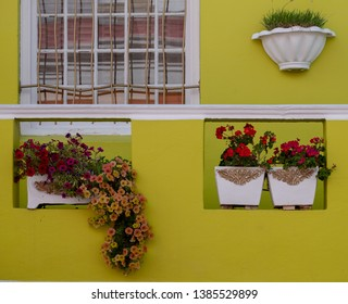 Cape Town, South Africa. March 2019. Close up of flowers outside house in the Malay Quarter, Bo Kaap, Cape Town, South Africa. Historical area of brightly painted houses in the city centre.