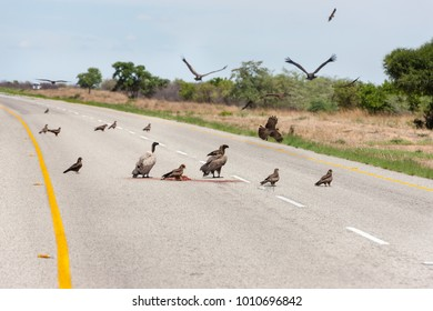 Cape vultures feeding on a carcass on the open road