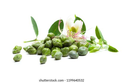 Caper. Capers flower, green leaves and bud on white background