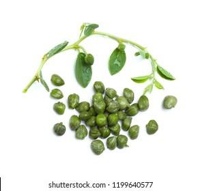 Caper plant, capers and green leaves on white background