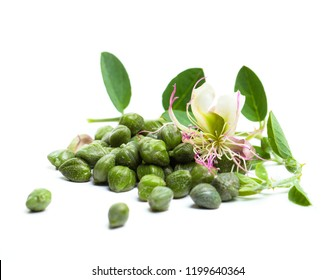 Caper plant, green leaves and flower. Capers on white background.