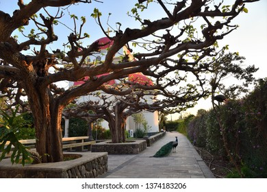 Capernaum, Israel - April 3, 2019: The courtyard of the Greek Orthodox Church of the Holy Apostles in Capernaum near the shore of the Sea of Galilee in Israel shown at sunset