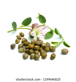 Capers and caper plant on white background