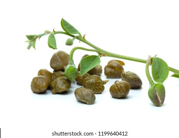 Capers with green caper plant leaves on white background