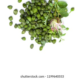 Capers with green caper plant leaves and flower on white background