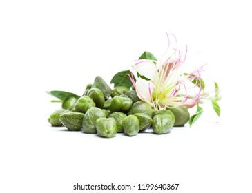 Capers on white background. Caper plant, bud, green leaves and flower