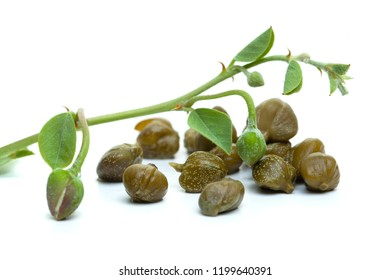 Capers on white background. Caper bud, plant, green leaves and flower