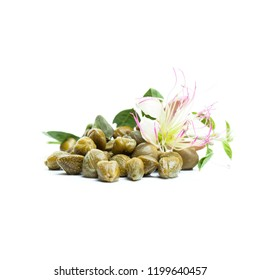 Capers on white. Capers bud, green leaves and flower on white background